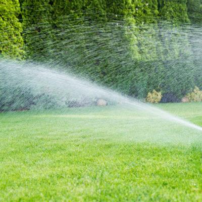Mantenimiento de jardines: los 5+1 imprescindibles
