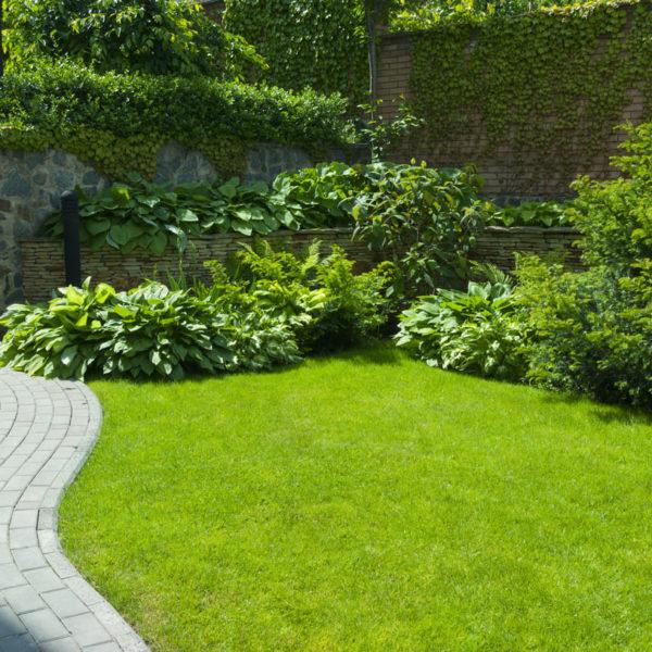 10 arbustos de jardín para un espacio de revista