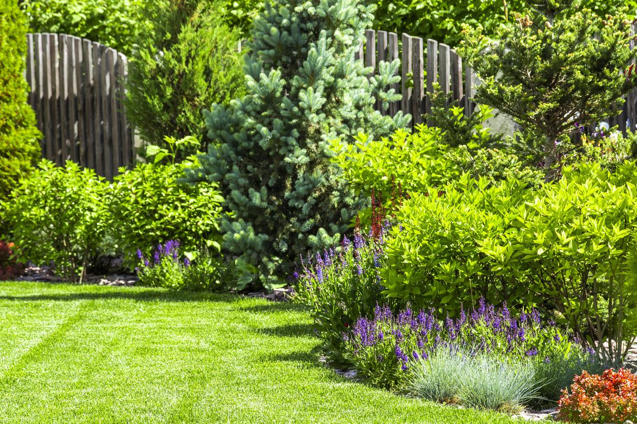 arbustos de jardín
