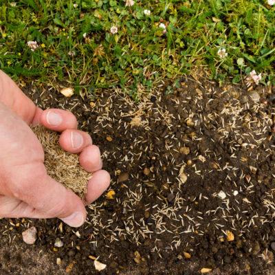Cómo plantar césped natural paso a paso