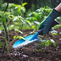 Guía sobre abono para plantas: todo lo que debes saber