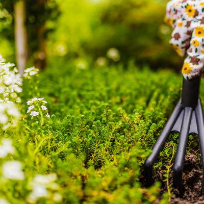 Tipos de herramientas de jardinería