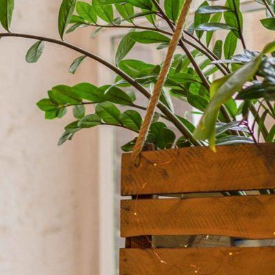 Cómo construir una maceta colgante para tus plantas