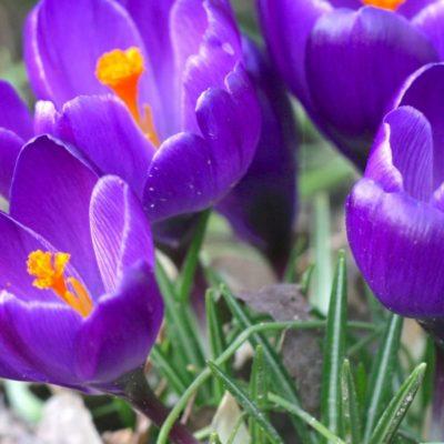 Los mejores trucos de jardinería para febrero