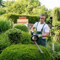 Los mejores tipos de setos para tu jardín