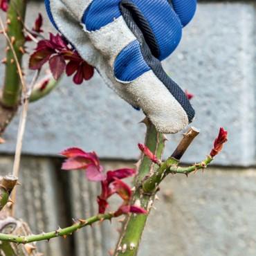 trucos de jardinería