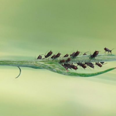 Control de plagas: ¿cómo controlarlas naturalmente?