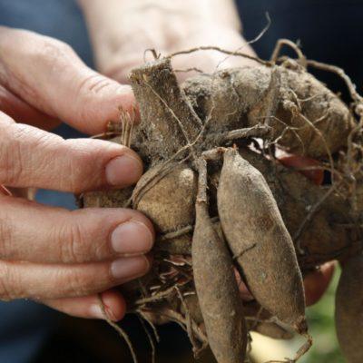 Los mejores trucos de jardinería para mayo