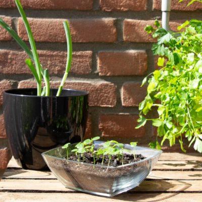 Cultivar verduras en casa: ¿cómo hacerlo?