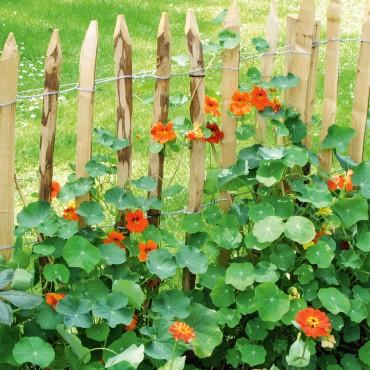 Trucos jardinería junio