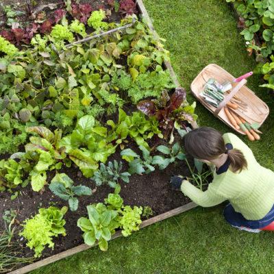 Calendario de siembra para tu huerto: ¡útil y práctico!