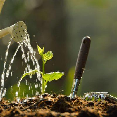 Cómo hacer un huerto en el jardín de tu casa