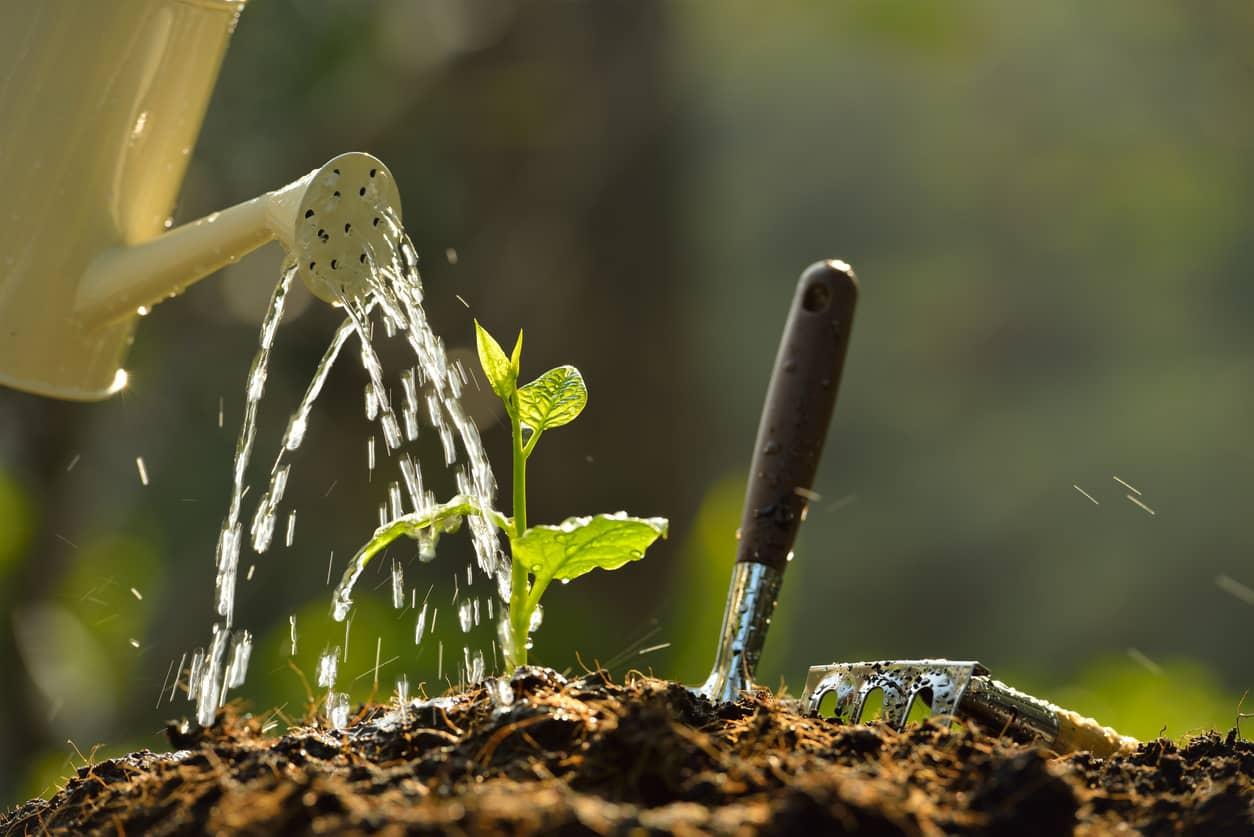como hacer un huerto en el jardín