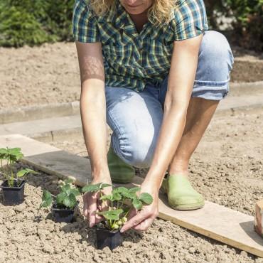 Trucos jardinería julio