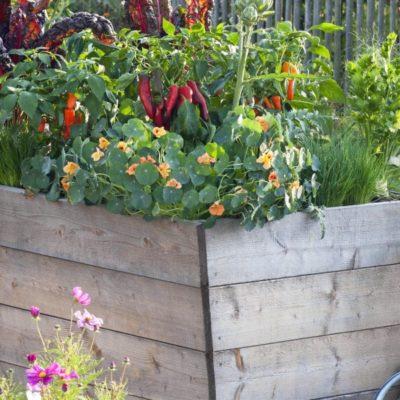 Plantar verduras en huerto urbano: así se hace