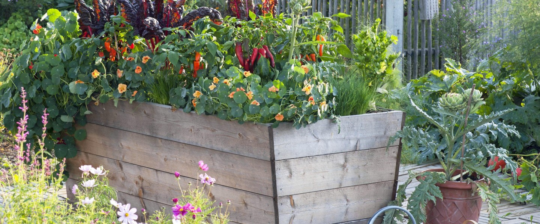 Plantar huerto urbano