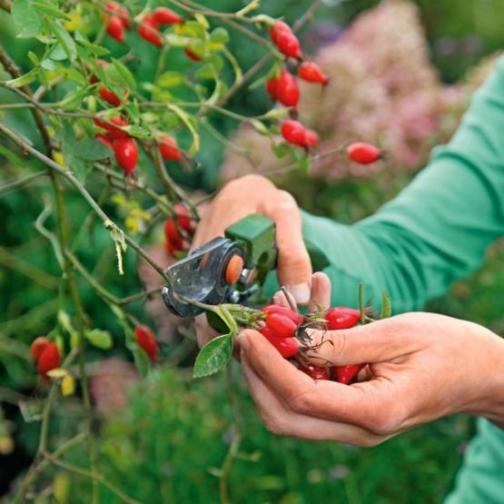 Trucos jardinería octubre
