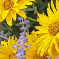 Los mejores trucos de jardinería para este mes de agosto