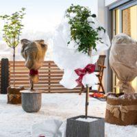 Los mejores trucos de jardinería para diciembre