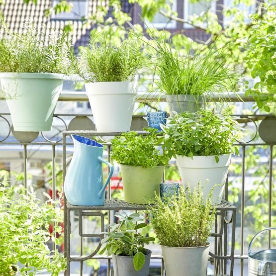 plantas para balcón