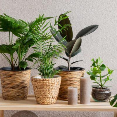 Ideas de decoración urban jungle para la habitación