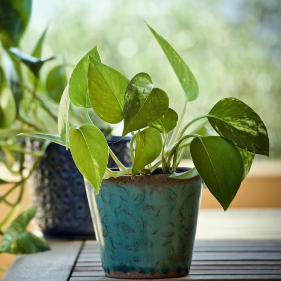 tipos de plantas interior