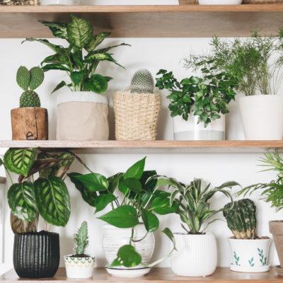 Beneficios de tener plantas de interior en tu hogar