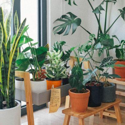 Las mejores plantas de interior para cualquier hogar
