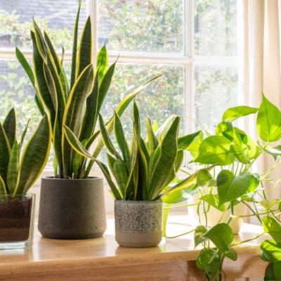 Plantas para purificar el aire: ¡descúbrelas todas aquí!