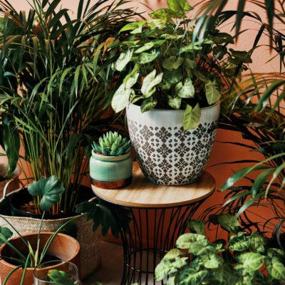 ¡Descubre los tipos de plantas de interior para tu hogar!