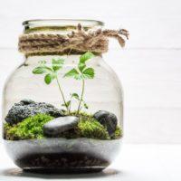 ¿Qué es un jardín eterno? Claves para crear el tuyo