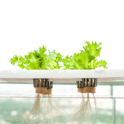 Cómo cultivar tu jardín hidropónico